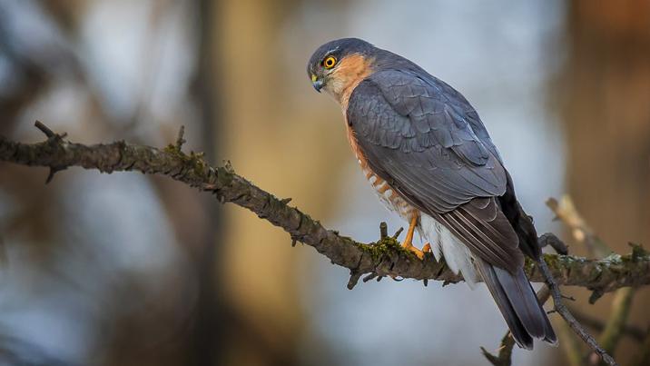 Smart Falconry